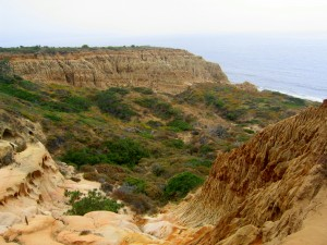 Torrey_Pines_State_Park_Valley